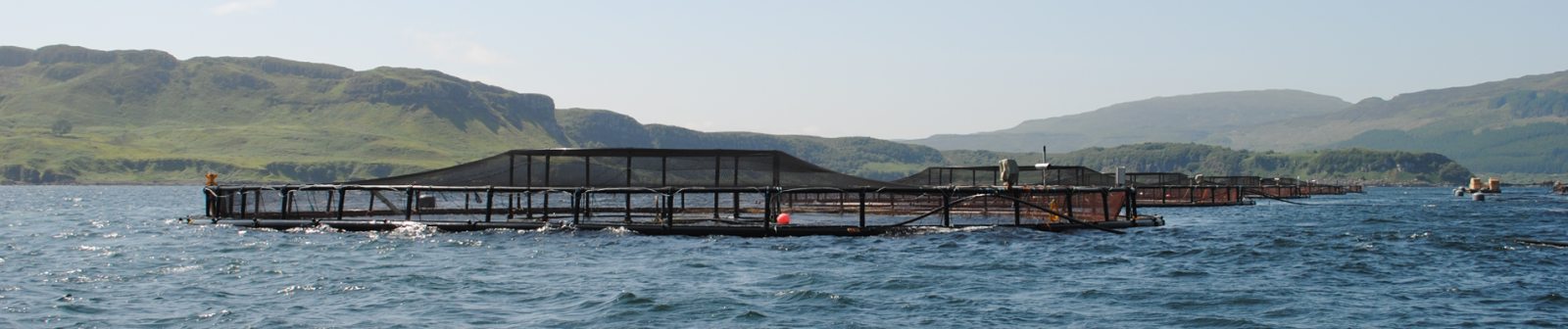 aquaculture.focus.fish.pens